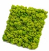 12''x12'' Reindeer moss wall panel - 1 sq ft Reindeer Moss Tile | color - spring green