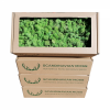 Premium - Swedish Reindeer Moss Light Green 500 g