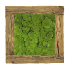 Moss art painting made of cushion - bun moss in a frame of old wood 56x56cm
