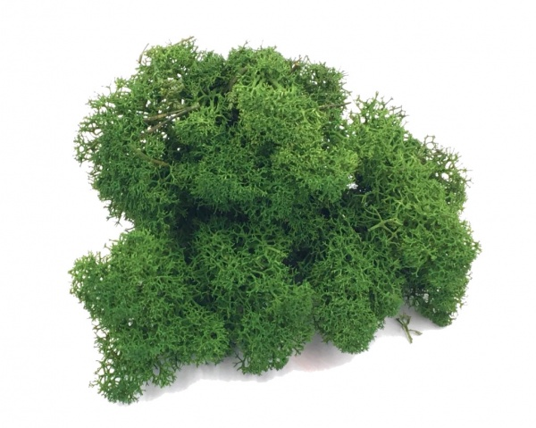 Purified FINNISH Reindeer Moss Dark Green 100g Bag