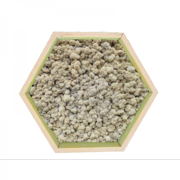 Honeycomb Wall Art made of natural - white reindeer moss in a plywood frame