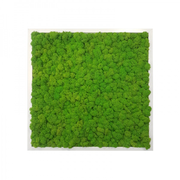 Painting - Wall Art made of spring green reindeer moss in a 50x50cm white wooden frame