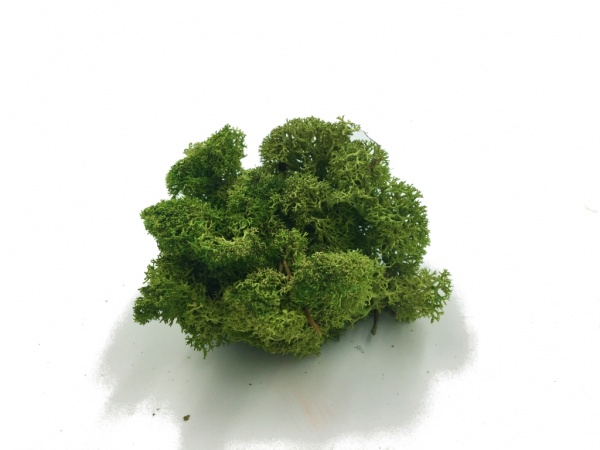 Reindeer Moss 5 kg Wholesale Box - Purified - Medium Green - Norwegian