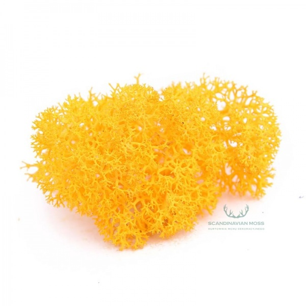 Purified Reindeer Moss Autumn 2,5 kg Norwegian
