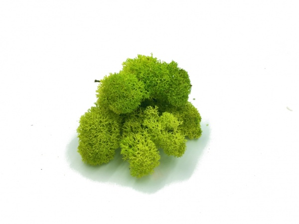 Purified Reindeer Moss Spring Green 2,5 kg Norwegian