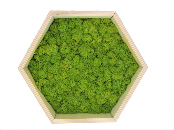 Honeycomb Wall Art made of spring green reindeer moss in a plywood frame
