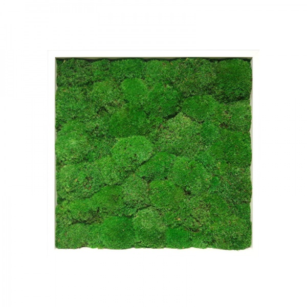 Painting made of preserved cushion  moss medium green in a 50x50cm white wooden frame