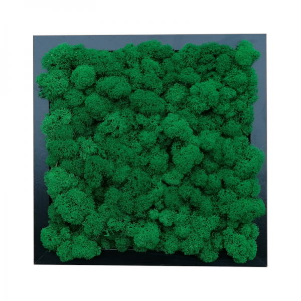 Painting - Wall Art made of medium green reindeer moss in a 25x25cm black wooden frame