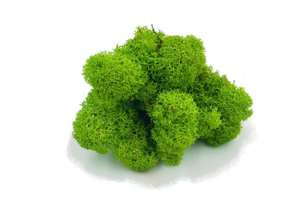 Purified FINNISH Reindeer Moss Spring Green 100g  Bag