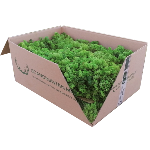 Premium - Swedish Reindeer Moss Light Green 5kg  Wholesale Box