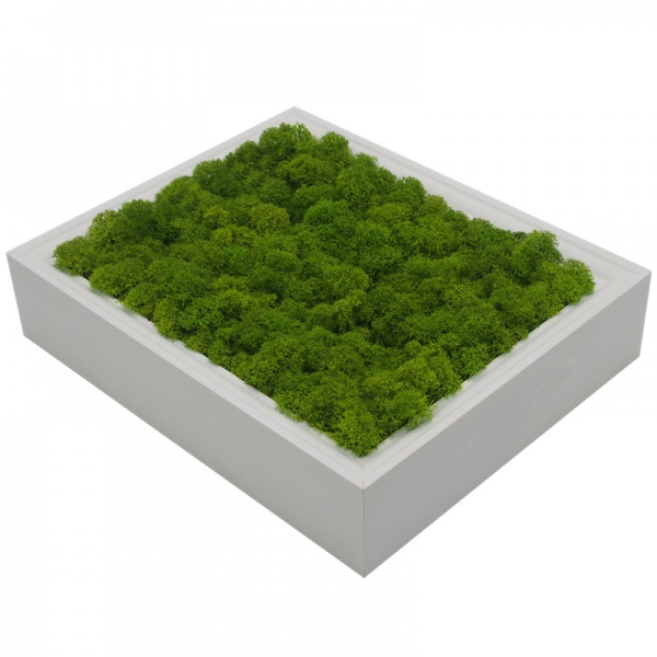 Wall Art made of spring green reindeer moss in a 28 x 23cm white wooden frame