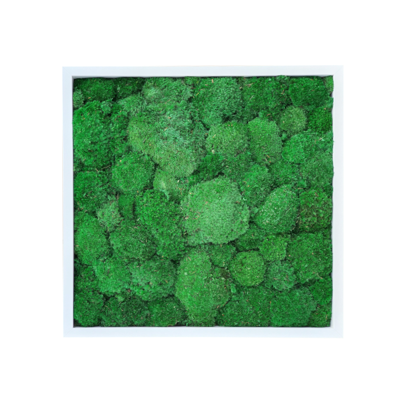 Dark Green Pillow /Bun Moss Picture 50x50 In White Frame