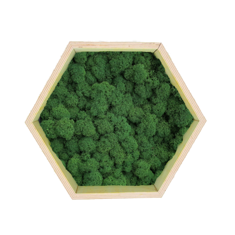 Honeycomb Wall Art made of dark green reindeer moss in a plywood frame