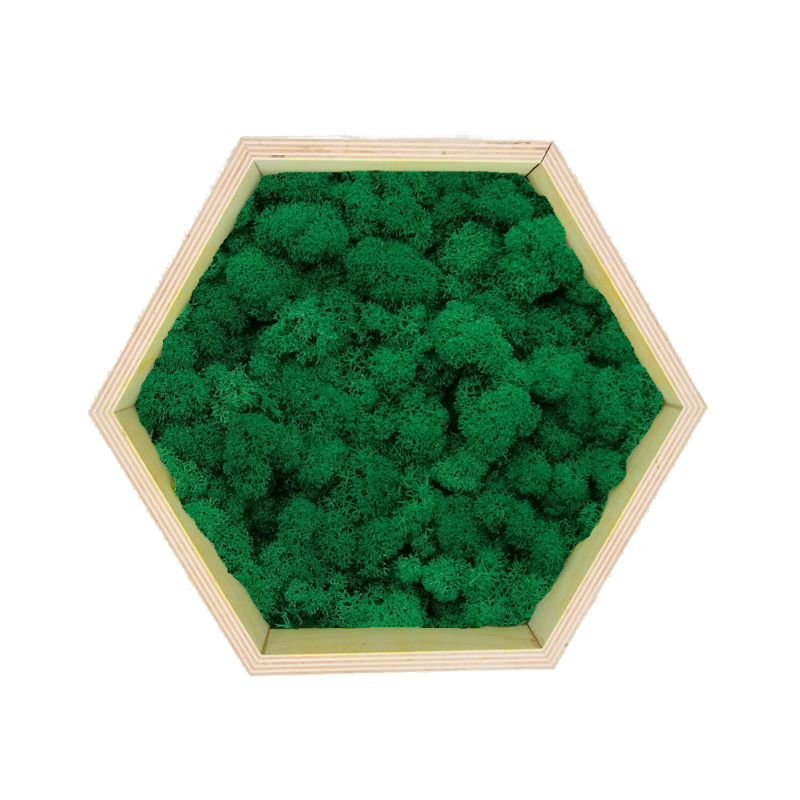 Honeycomb Wall Art made of medium green reindeer moss in a plywood frame