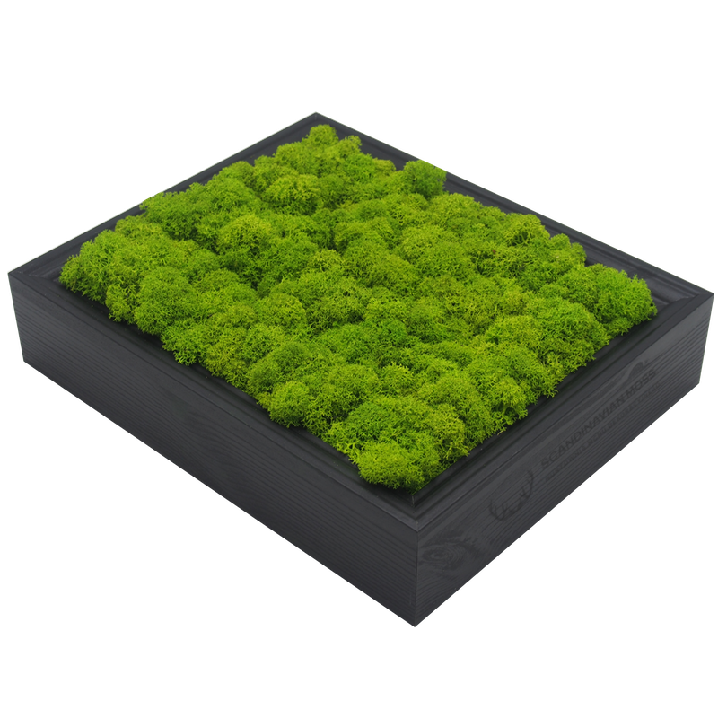 Painting made of spring green reindeer moss in a 28 x 23 cm black wooden frame