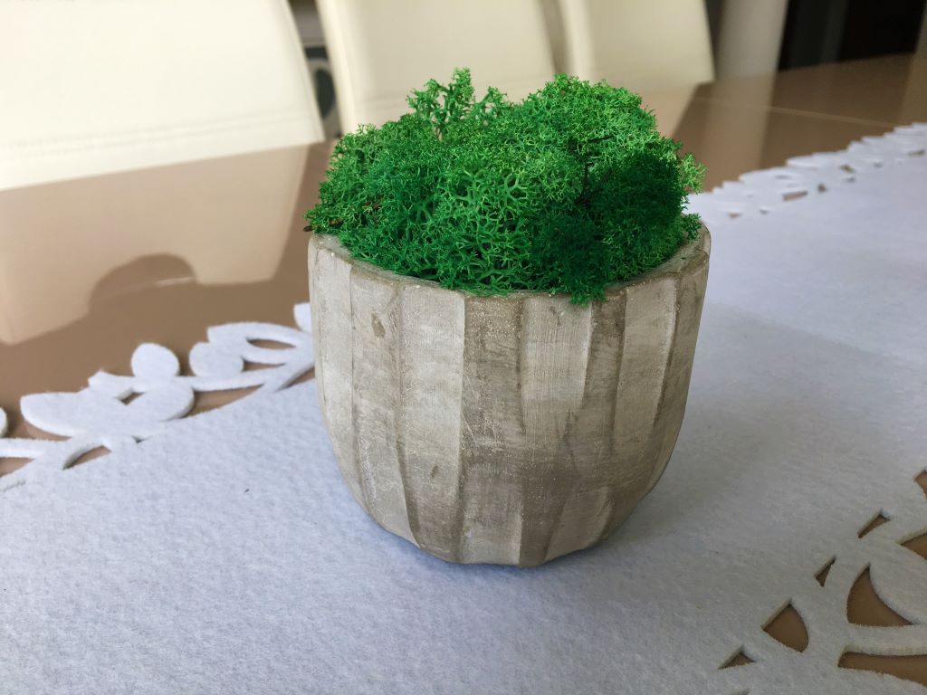 A wonderful medium size Zen-like pot of medium green reindeer moss