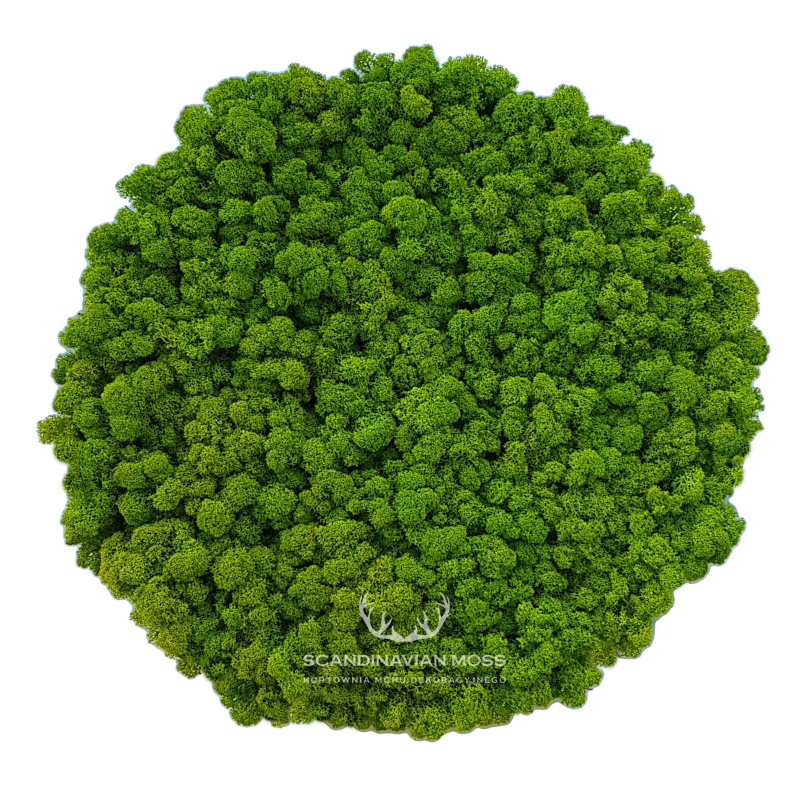 Round acoustic moss wall panel made of reindeer moss, 50cm diameter