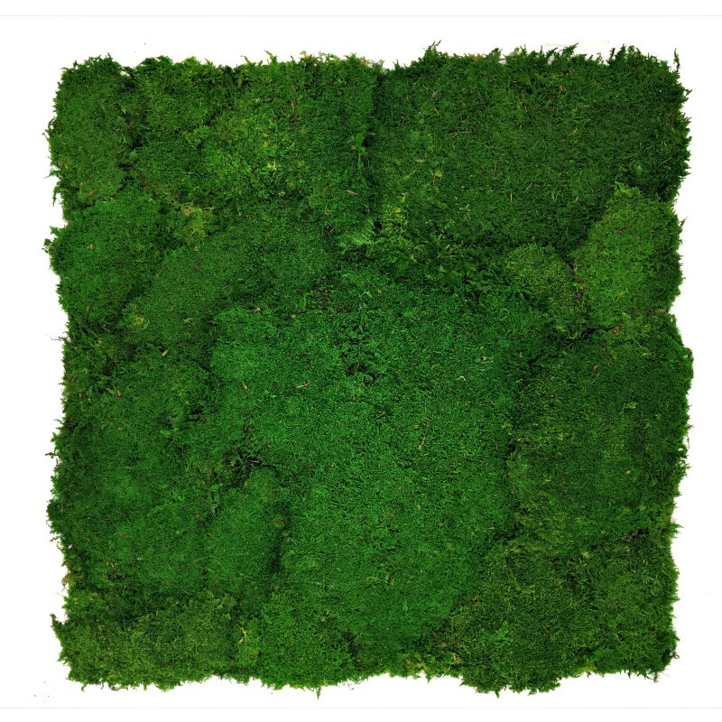 Flat moss wall panel 50 x 50cm | color - dark green