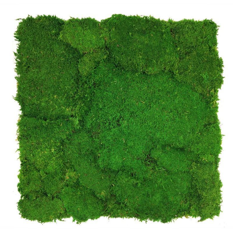 Flat moss wall panel 50 x 50cm | color - light green