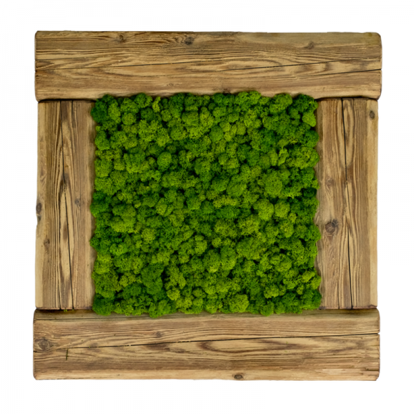 Wall art, painting made of dark green reindeer moss in a frame of old wood 56x56cm