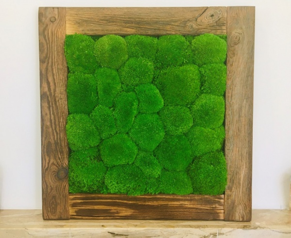 Painting - Wall Art made of pillow moss in a 54x54 cm old wood frame