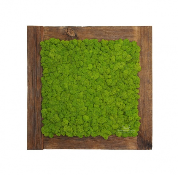 Painting - Wall Art made of spring green reindeer moss in a 54x54 cm old wood frame