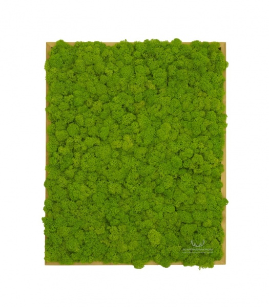 Painting - Wall Art made of spring green reindeer moss in a 50x40cm bamboo wood frame